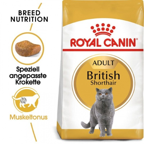 FBN British Shorthair 4kg