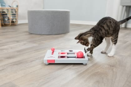Cat Activity Strategie-Spiel Brain Mover